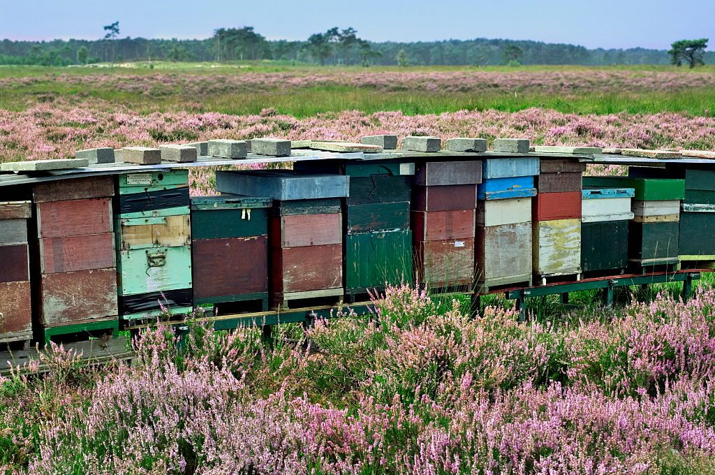Row of colorful wooden beehives