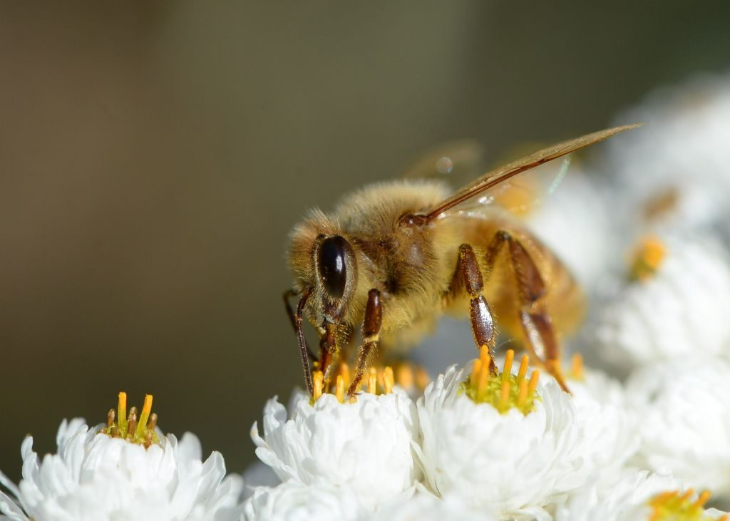 Pleasant 15 Bizarre Things You Never Knew About Bees Uwap Interior Chair Design Uwaporg