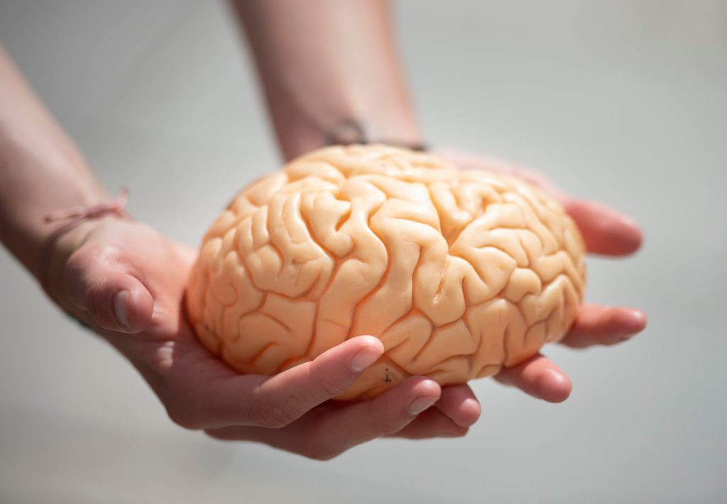 Woman holds a model brain