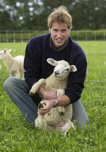 Prince William and a lamb