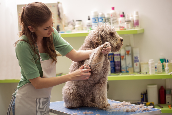 Dog at the groomer