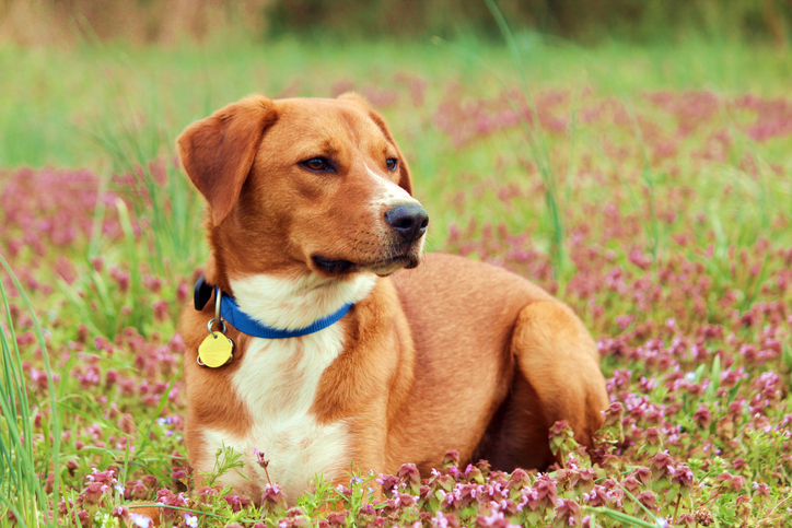 Dog wearing a collar with tags