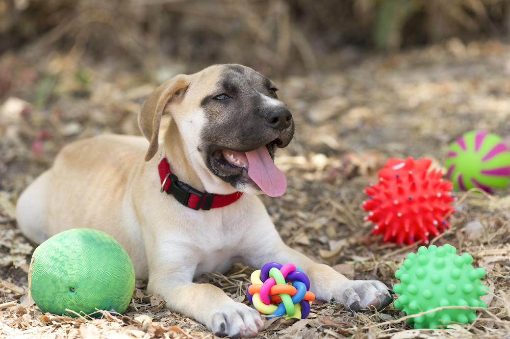 Happy puppy laying down with toys