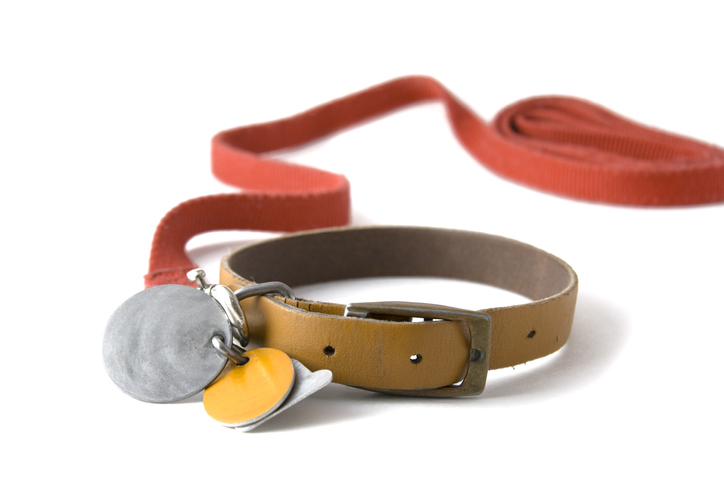 Dog collar with red leash