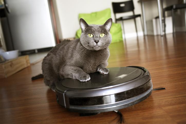 Cat sitting on robot vacuum