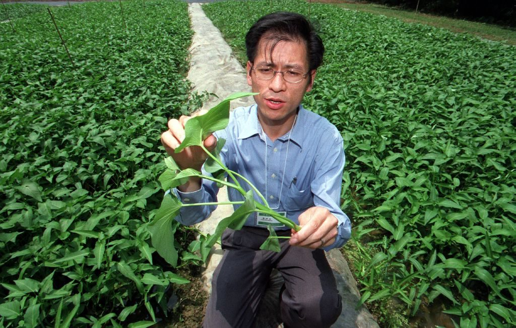 Organic water spinach grown in China