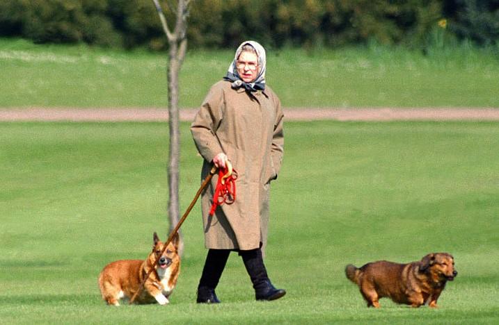 Queen Elizabeth II walking her corgis