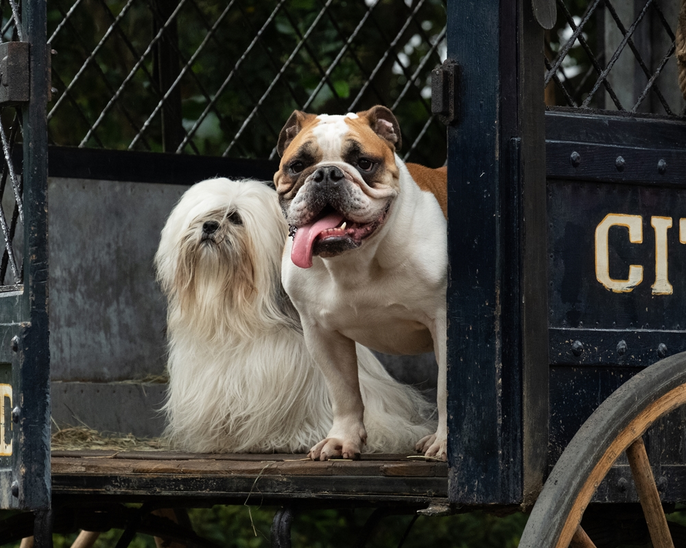 Lady and the Tramp: Peg and Bull