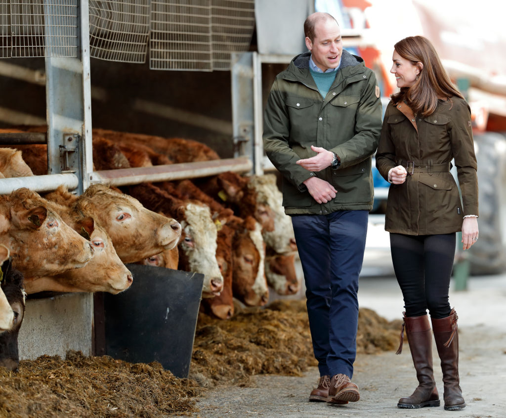 Prince William and Kate Middleton walking near cows