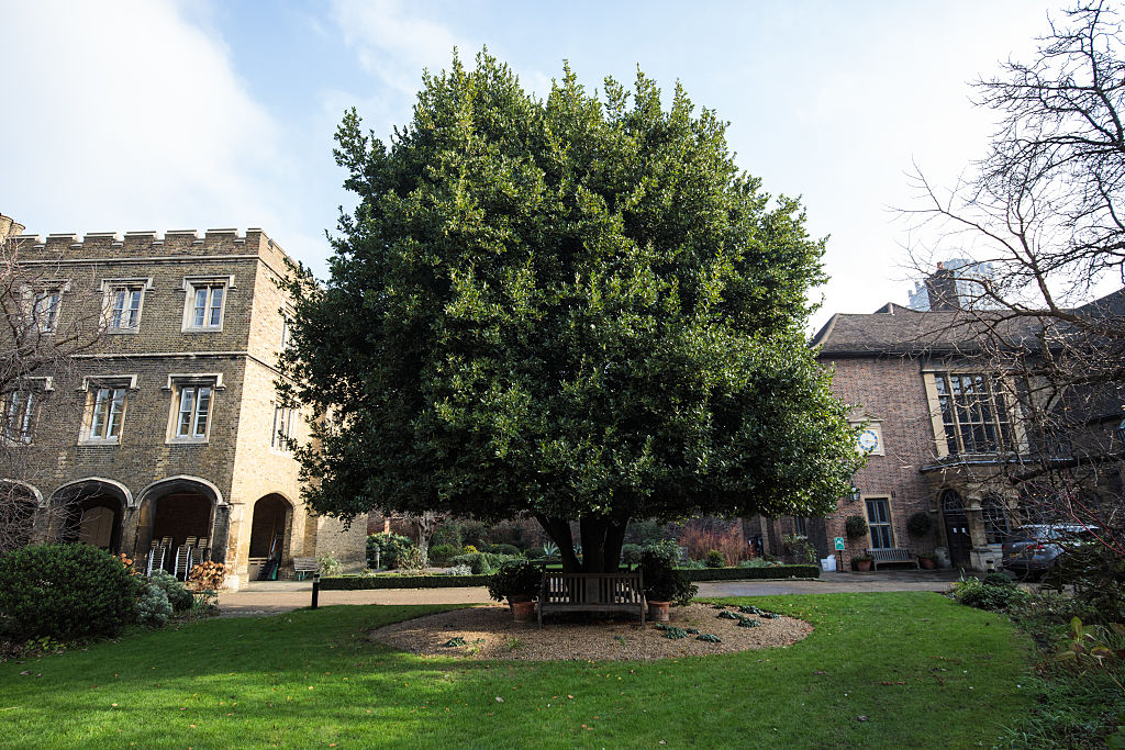 The Queen's Mulberry Tre at the London Charterhouse in Smithfield