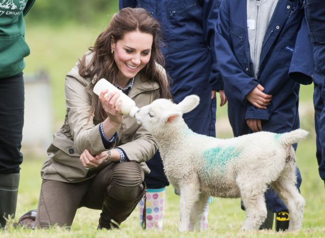 Kate Middleton and a lamb