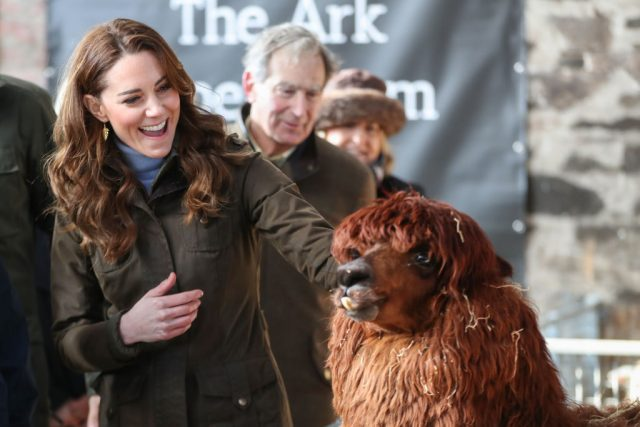 Kate Middleton and an Alpaca
