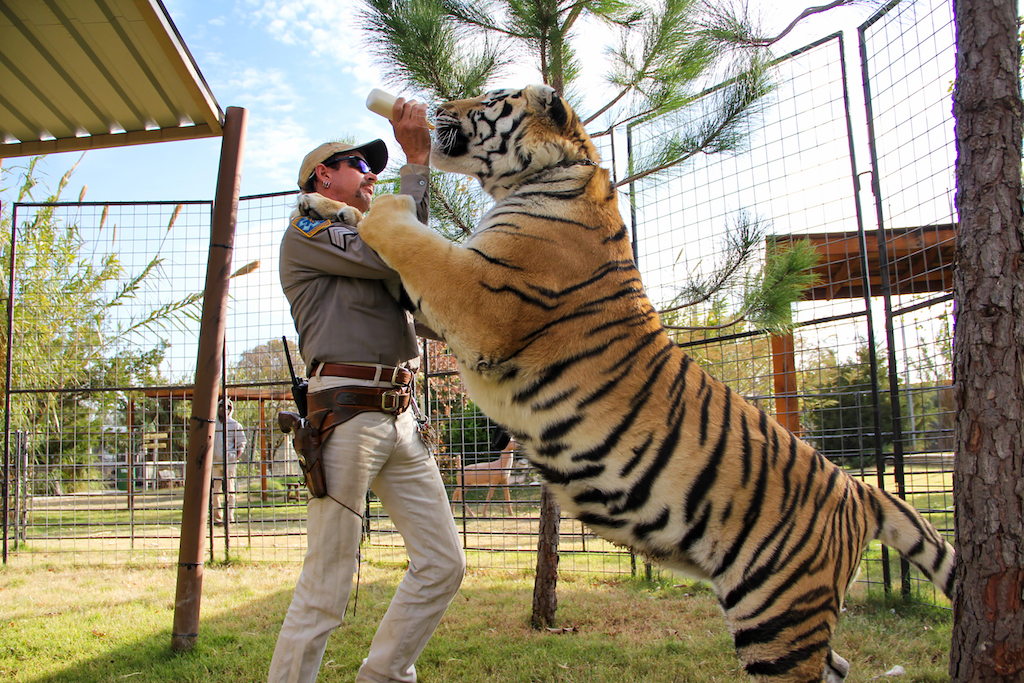 Joe Exotic feeding a tiger