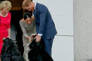 After Two Years the Secret Name of Prince Harry and Meghan Markle's Rescue Dog Has Been Revealed