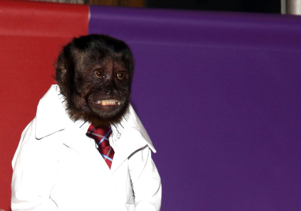 Crystal the Monkey smiling in a white coat in tie in front of a red and purple backdrop