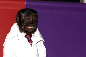 The Monkey From 'Community' and 'The Hangover Part II' Makes an Insane $12,000 Per Episode