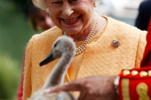 Queen Elizabeth Owns All the Swans on River Thames Plus Some Other Weird Things