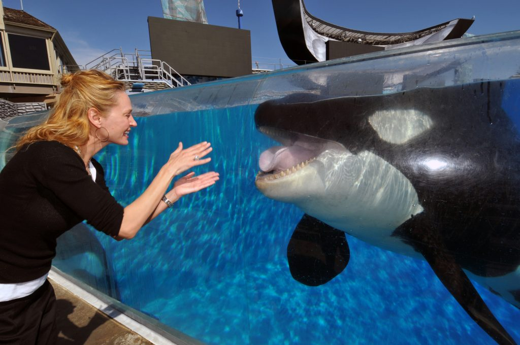 A woman at SeaWorld interacting with a whale