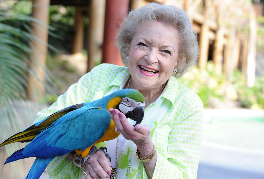 Betty White in 2014 |  Angela Weiss/Getty Images