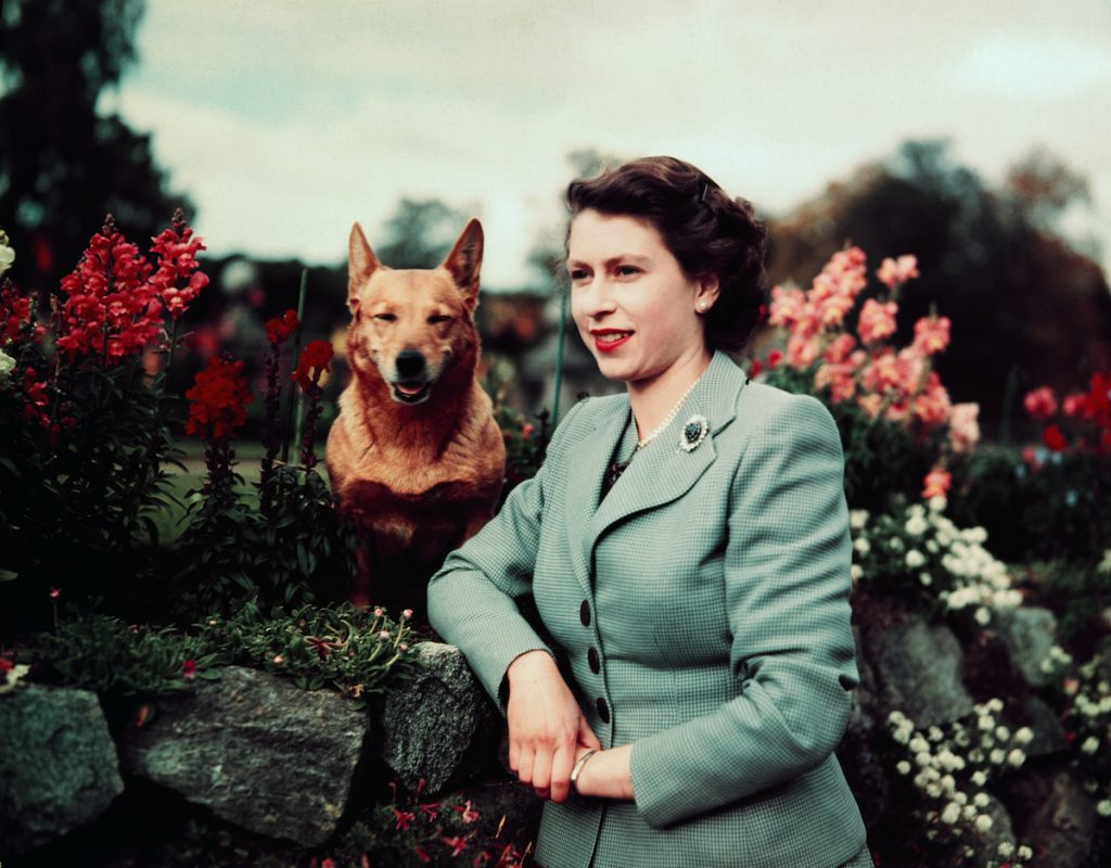 Queen Elizabeth II of England at Balmoral Castle with one of her Corgis.