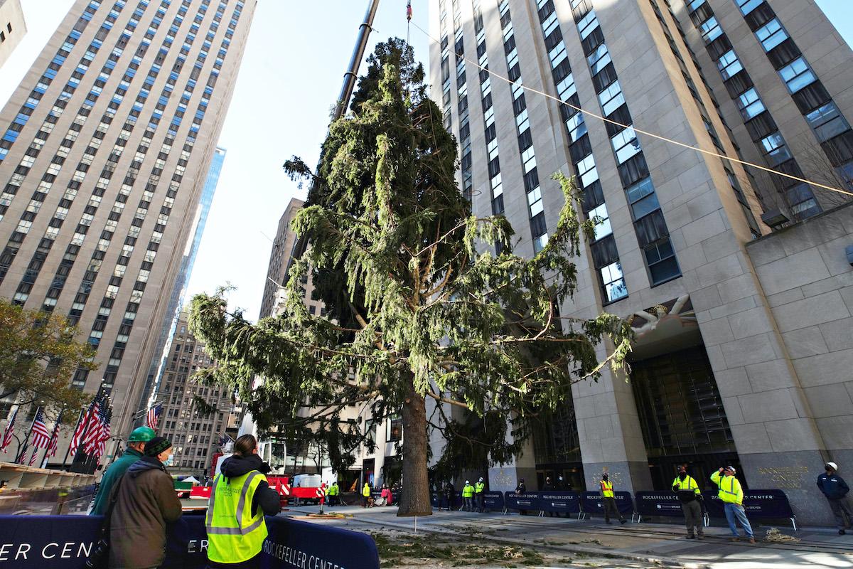 The Rockefeller Center Christmas Tree arrives at Rockefeller Plaza