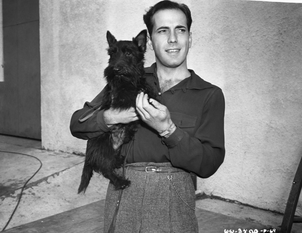 Humphrey Bogart holding a Scottish terrier, in black and white
