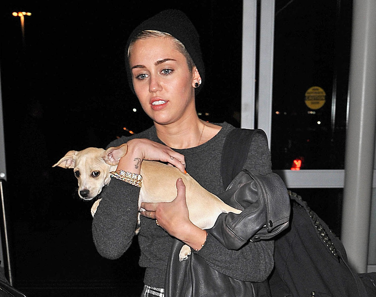 Miley Cyrus in a black beanie holding a small dog