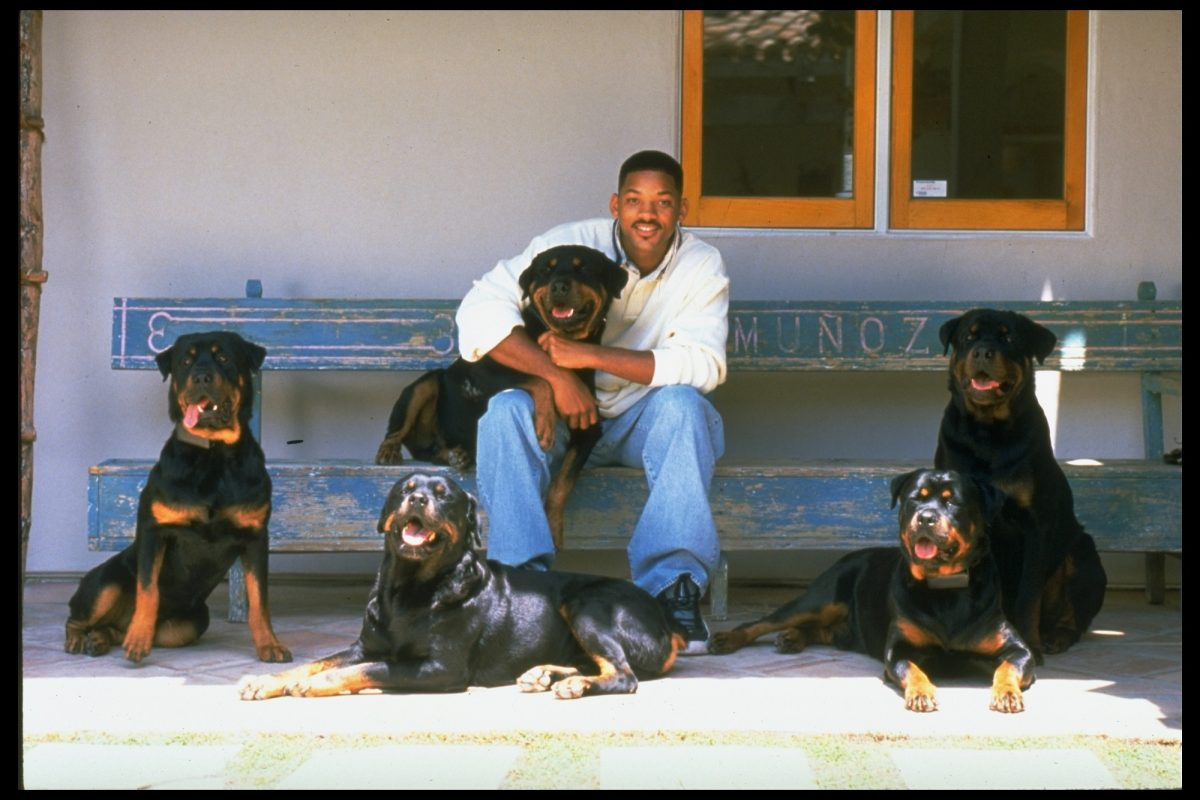 Will Smith with five rotweilers in 1996
