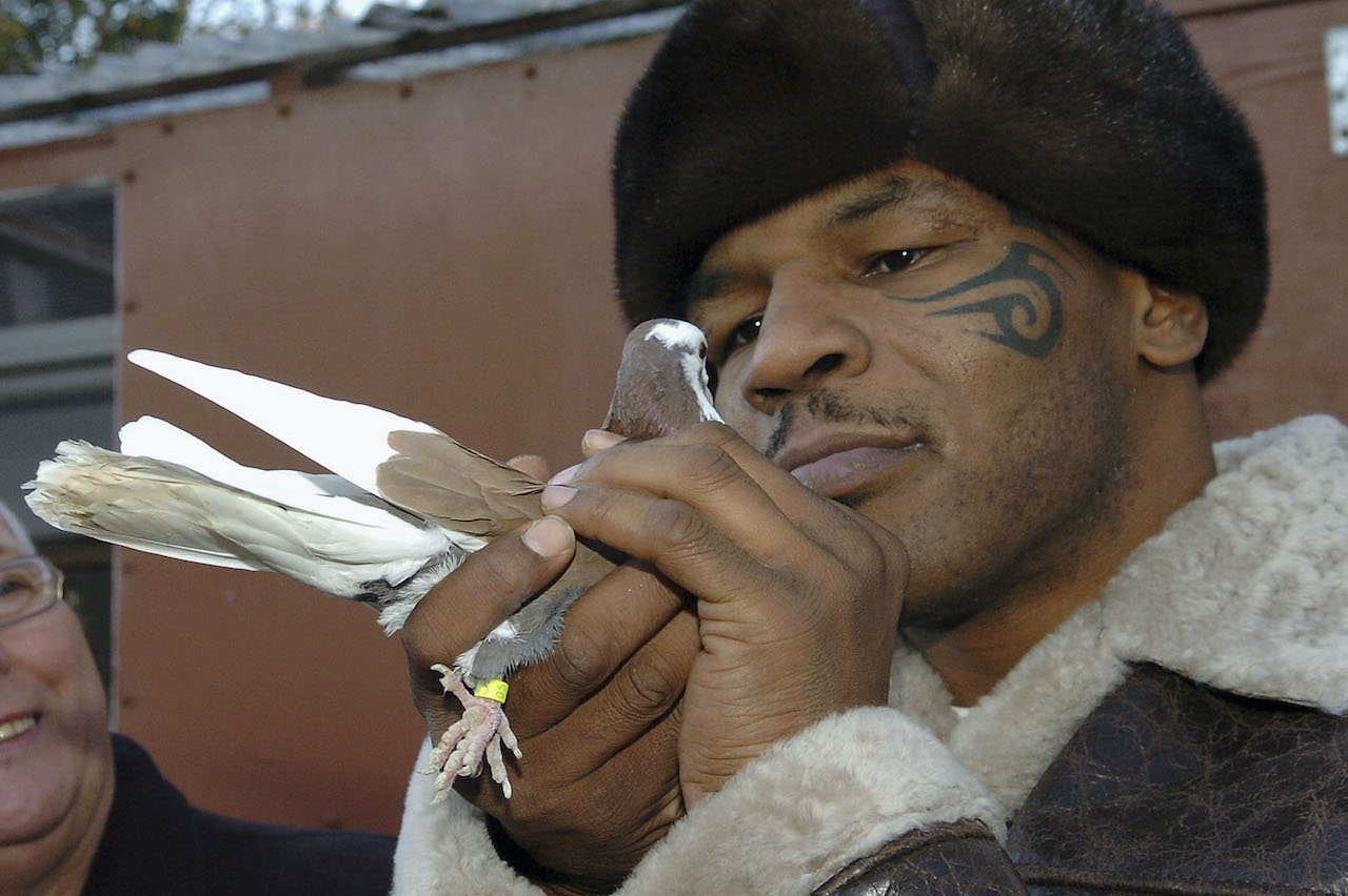 Mike Tyson meets up with a pigeon fancier Horace Potts (L), of Bloxwich, Walsall, West Midlands