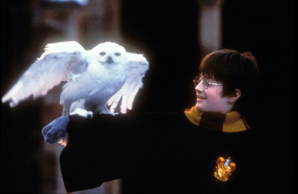 Daniel Radcliffe as Harry Potter with an owl in the first 'Harry Potter' movie, which is available for streaming