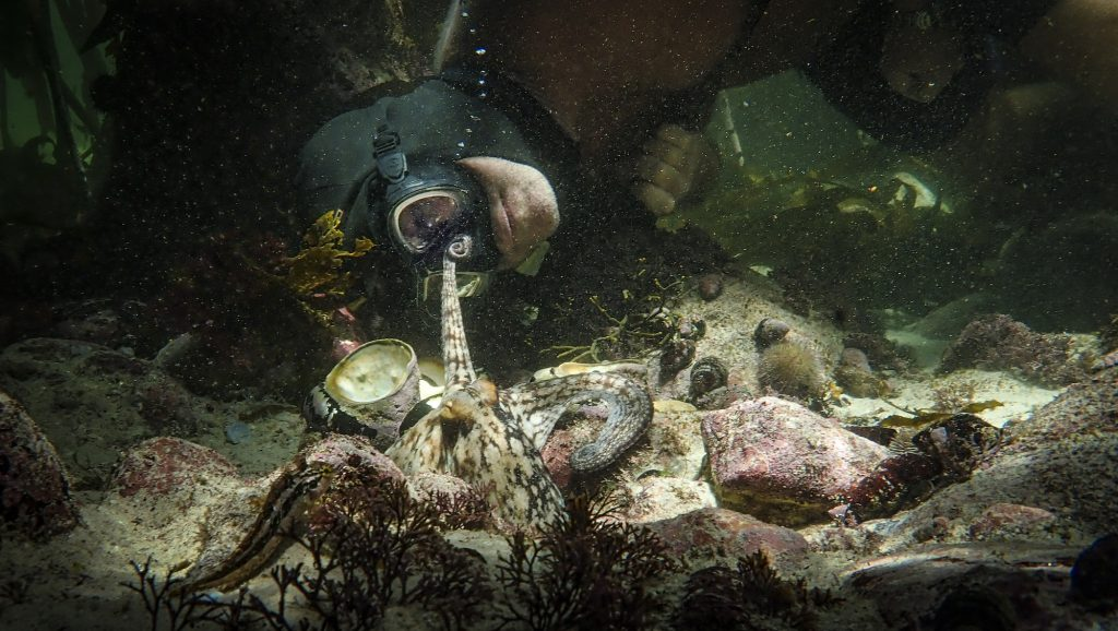 Craig Foster underwater at the sea floor swimming behind an octopus