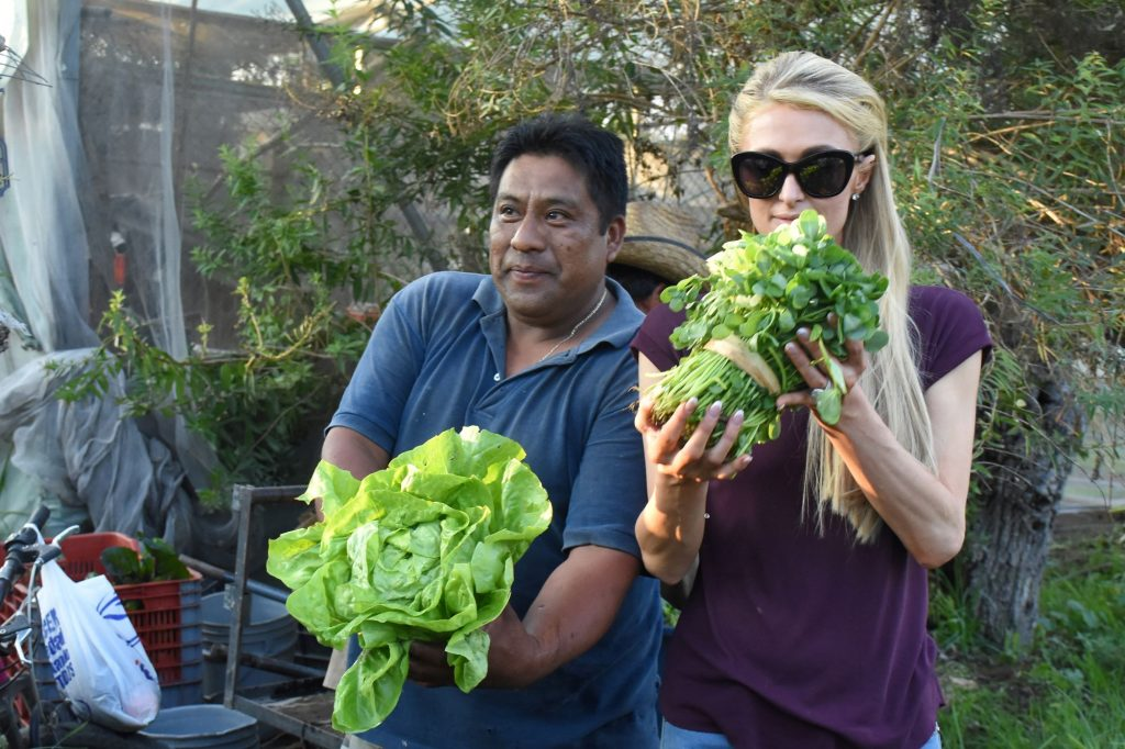 Paris Hilton holding lettuce from a farm visit in Mexico